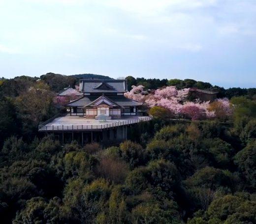 将軍塚青龍殿 天空の桜 映像制作